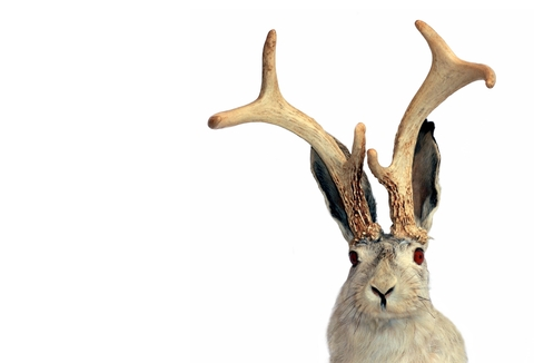 The Jackalope: A Symbol of Giving Back & Giving Forward: Networking in Action